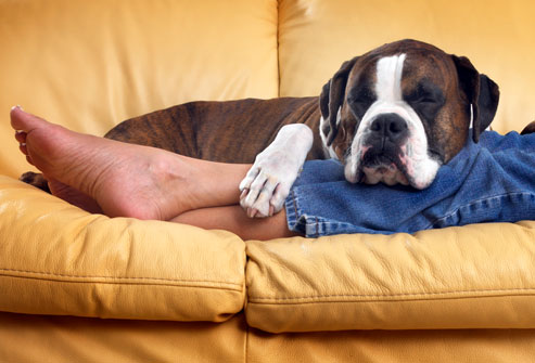 Relaxing with dog on sofa